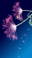 iphone-5-wallpapers-0081